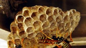 wasp control swindon