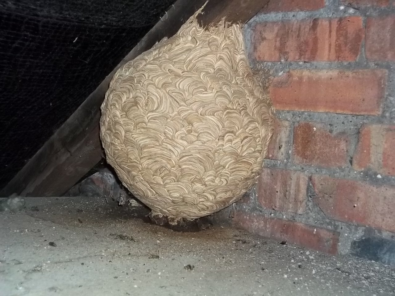 Pest Control In Swindon And Wiltshire - Professional Pest Control Solutions